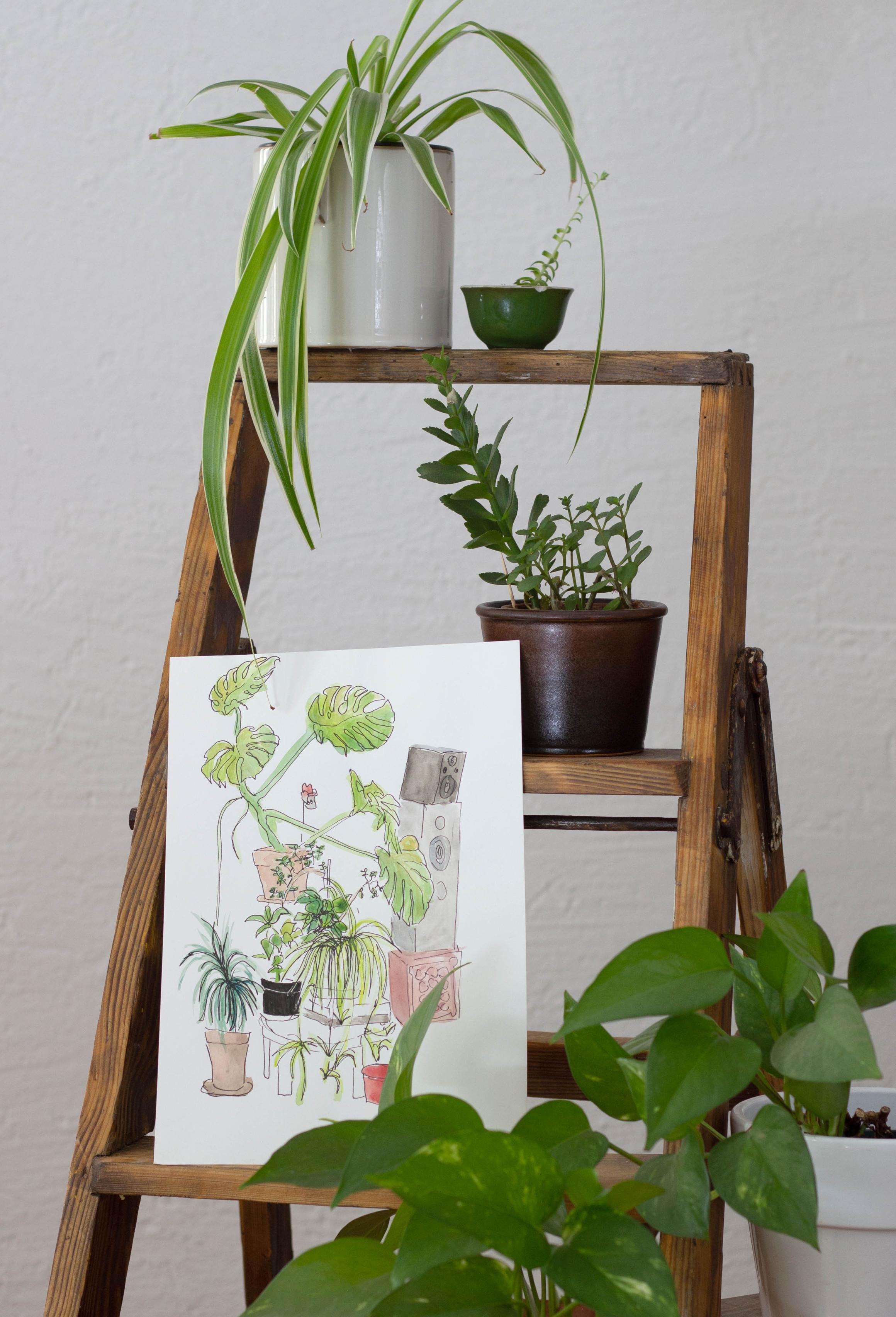 Foto einer Zeichnung von Zimmerpflanzen. Daneben mehrere echte Pflanzen in Töpfen.