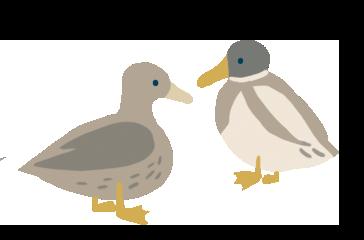 Zeichnung von einem Entenpaar.