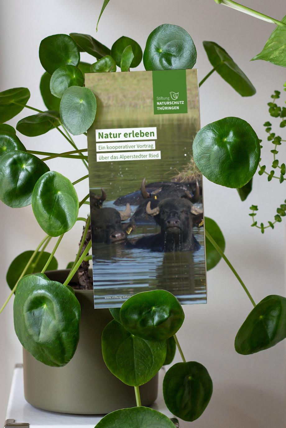 In einer Ufopflanze hängt ein Flyer. Auf dem Flyer sind badende Büffel zu sehen.